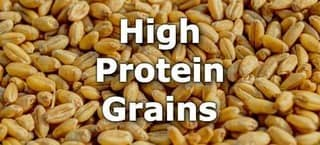 High Protein Grains